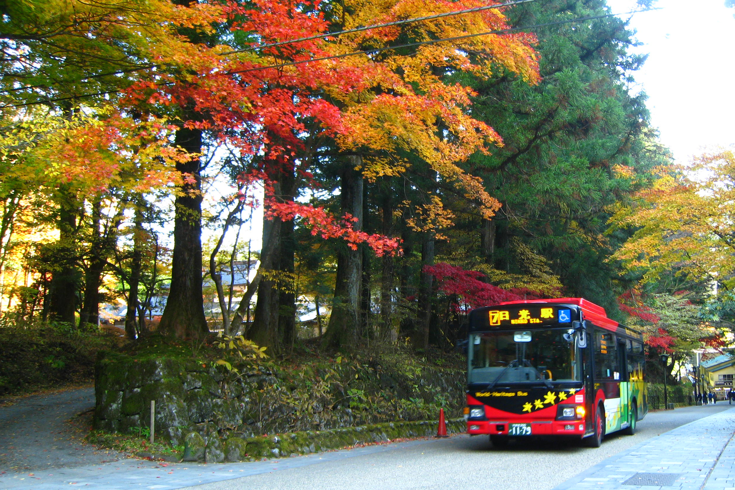 World Heritage Bus